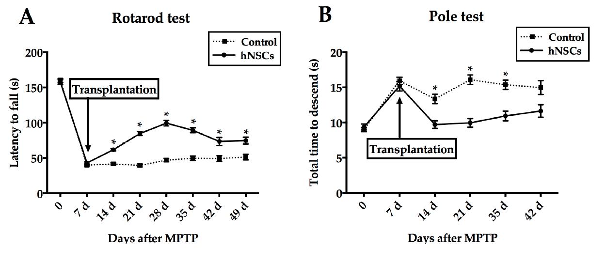 【组图】帕金森动物模型实验解密神经干细胞移植治疗